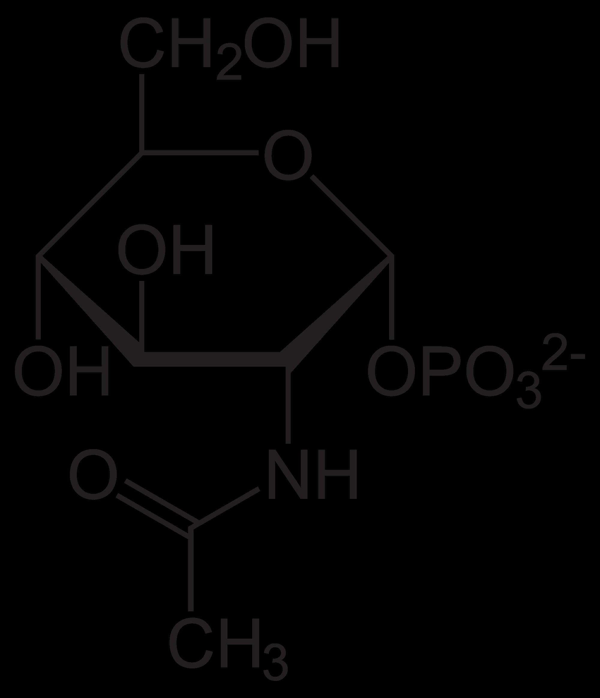 tac-dung-cua-glucosamine-doi-voi-xuong-khop-2
