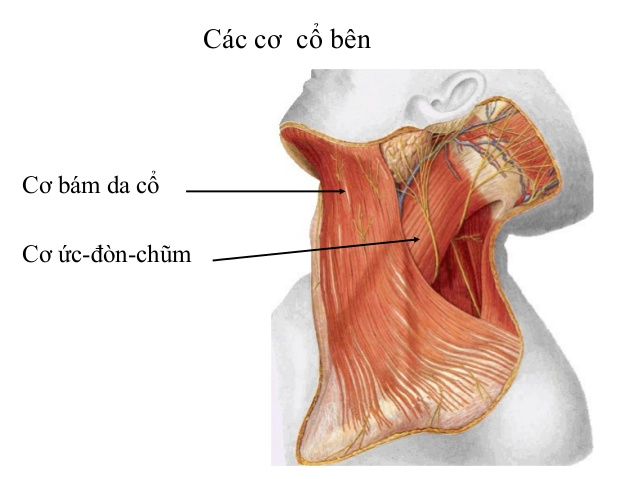 đau cổ gáy bên trái